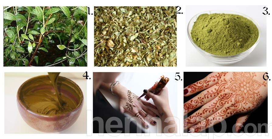 A henna növénytől a hennafestésig